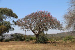 Ein Baum in Emmaberg
