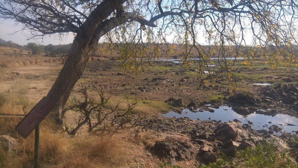 In der Trockenzeit ist der Fluss Ruaha fast ausgetrocknet.