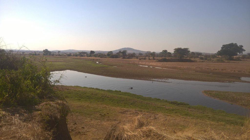 Krokodile im fast ausgetrockneten Fluss.