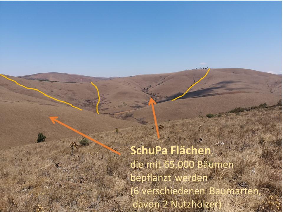 Makangarawe: SchuPa-Aufforstungsflächen