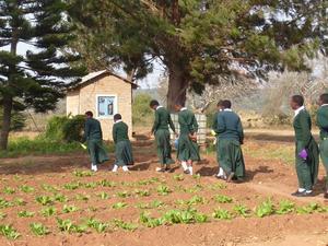 Die Schülerinnen bei der Feldarbeit