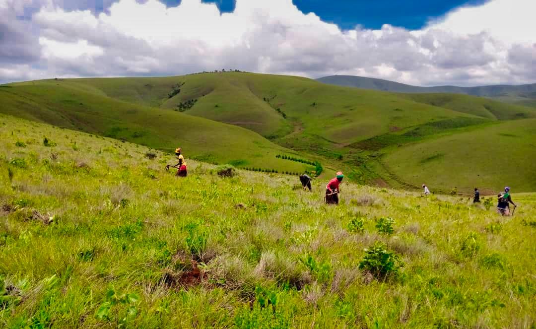 Aufforstungsflächen Makangarawe